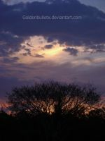 Sunset over treetops by GoldenBulletx