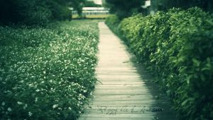 The Garden by peggyn21789