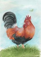 a rooster by Schiraki