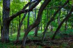 00-TalorsvilleLakeStatePark-June-2015-DSC06897-WP- by darkmoonphoto