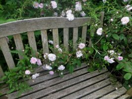 BENCH OF ROSES IN MY GARDEN by GeaAusten