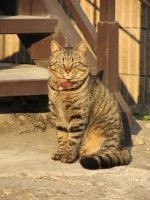 Cat in Japan:Cat on street 01 by iguru71