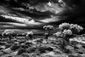 Storm is coming, bw by elimoe