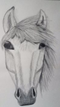 Oh my gosh...Suppose to be a horse by alysathena
