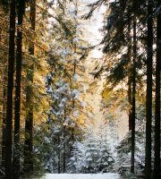 Forest beauty by KariLiimatainen