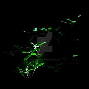 Torch Experiments #5 - Rhododendron by Paranormal-Hyperbola
