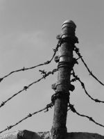 Barb Wire by creatingJunk