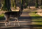 The King crossing my way by TheFunnySpider
