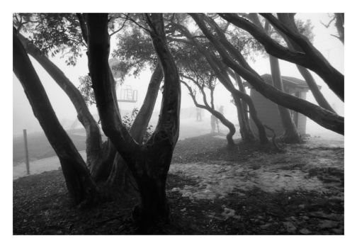 Fog in the Trees II by Sostopher