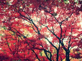 Red and Black tree by OliverC376