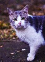 street cat again by Emmatyan