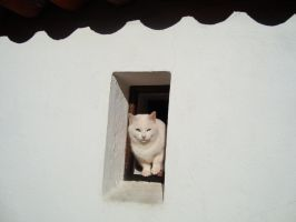 White Cat by Sonia-Rebelo