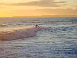 Surfing by Sonia-Rebelo
