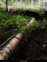 Forest 11 by AnitaJoy-Stock