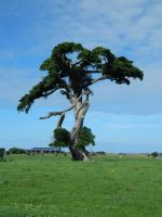 Tree 001 - HB593200 by hb593200