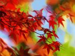Autumn by coolwindsg