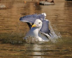 Dancing Seagull by photoquilter