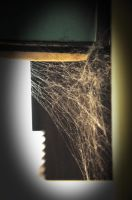 Spider Web by Seth890603