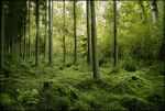 BG Green Woods by Eirian-stock