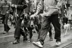 Dogs on parade. by Be-at