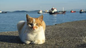 cats of Istambul 5 by Mari-Ghostly