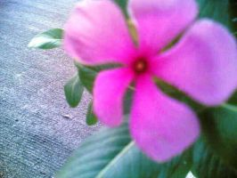 Shining Pink. by dhesz