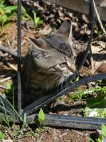 My cat in the yard by Artculpit