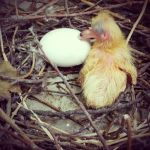 Baby Pigeons by roxan1930