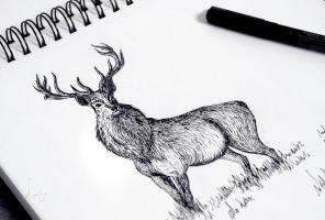 Deer by Chamandra