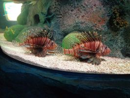 lion fishes by wiccanwitchiepoo