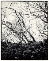 Trees and Stones 01 by HorstSchmier