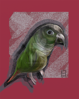 Parrot by Shnax