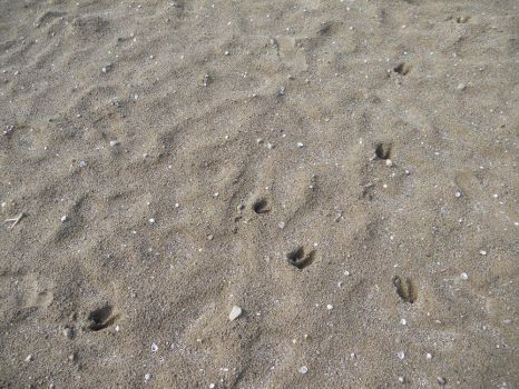 Deer Tracks on the Beach by Lady-Xythis