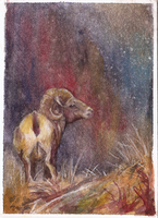 aceo mountain ram by kailavmp