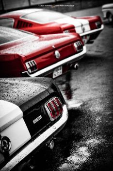 Fastbacks by AmericanMuscle