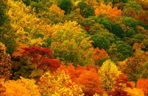Fall valley, cropped.img614 by harrietsfriend