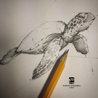 20170130 Turtle Sketch Psdelux by psdeluxe