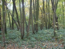 Wood, Forest IX by Anemya-Stock