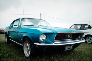 meet the Mustang. by RowennaCox