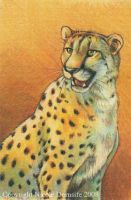 Cheetah Portrait by thornwolf