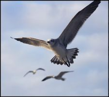 Seagulls Flying by SalemCat