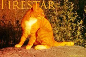 .Firestar. by Kitty-Wolf