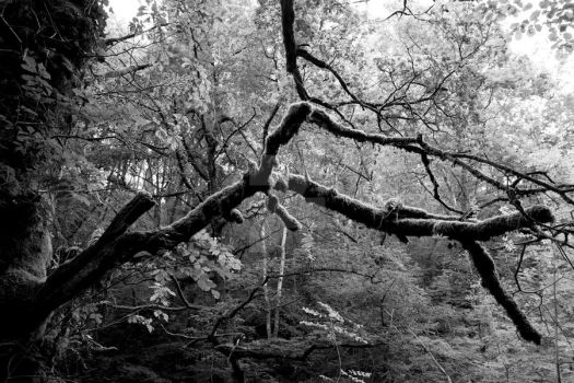 Branches with Moss by Interceptstudios
