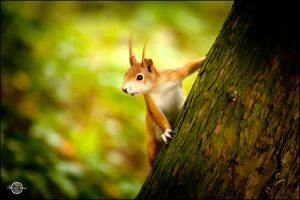 squirrel II by RemusSirion