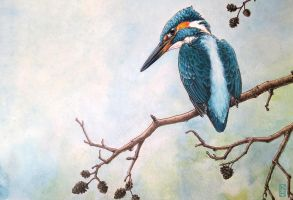 Kingfisher by Korpinarhi