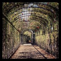 The garden of loneliness by venigesheva