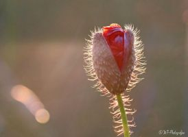 new life awakens in the evening sun by MT-Photografien