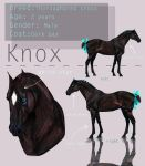 Knox Character Sheet by Ospreyghost13
