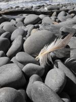 Feather on Rocks by Obey-the-soapbubble