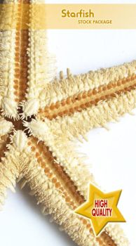 Starfish Stock Package by SweetSummerStock